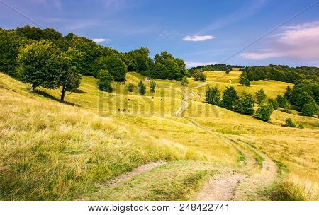 Dirt Road Uphill Through Grassy Rolling Hills. Beautiful Mountainous Landscape With Beech Forest In