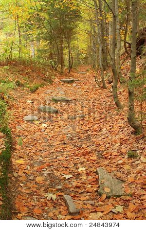 Forest path  at autumn time, Czech republic, mountains Jesenik
