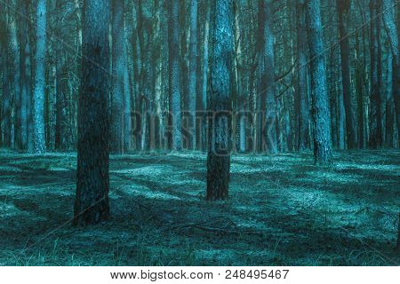 Terrible And Mysterious Night Forest With Tall Pines No One Around Just An Exciting Wilderness
