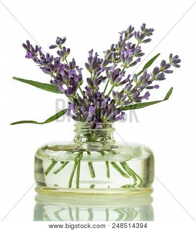 Bouquet Of Lavender Branches In Glass Jar, Isolated On White Background