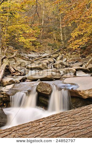 Mountain stream running through forest in Catsklill Mtn poster