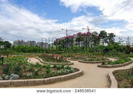 Pureun Arboreteum Rose Garden