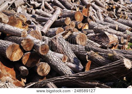 Stack of firewood. Wooden log. Pile of wood logs ready for winter. Firewood Pile. Wood Pile