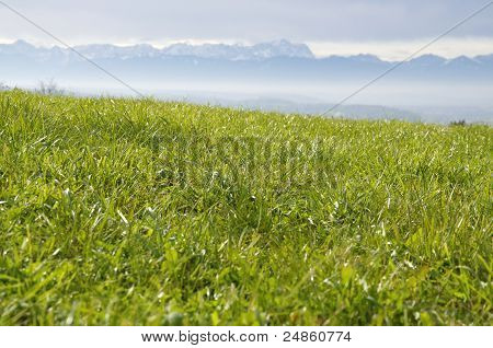 Green Pasture In The Alps