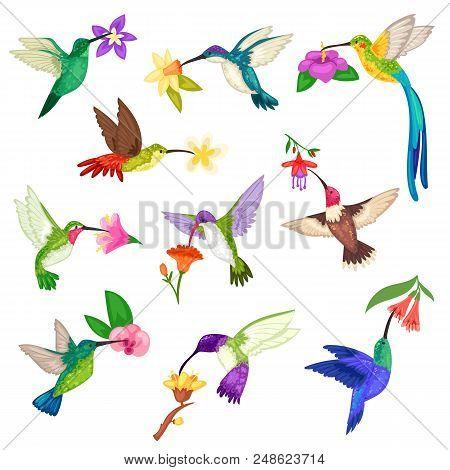 Hummingbird Vector Tropical Humming Bird Character With Beautiful Birdie Wings On Exotic Flowers In