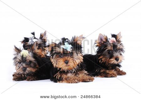 Portrait Of Four Puppies