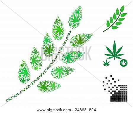 Leaf Branch Mosaic Of Marijuana Leaves In Variable Sizes And Color Tinges. Vector Flat Cannabis Leav