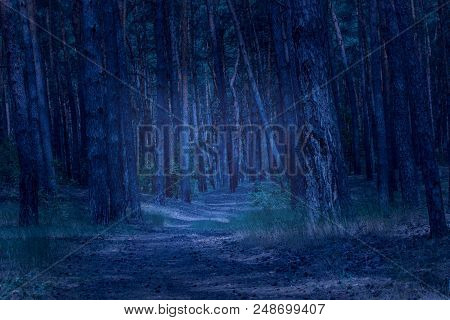 Trail In The Evening Coniferous Forest Leads To A Mysterious Radiance And Densely Growing Pines An E
