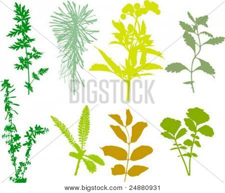 Field  plants, herbs, leaves, traced, colors. Vector