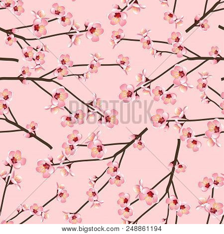 Momo Peach Flower Blossom Seamless On Pink Background. Vector Illustration.