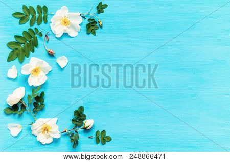 Summer Flower Background With Composition Made Of White Rose Flowers On The Blue Wooden Background.