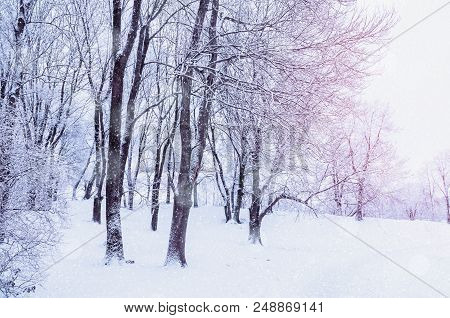 Winter landscape with falling snow - wonderland winter forest with snowfall over winter grove. Snowy winter scene with Christmas and New Year winter mood. Winter picturesque park during the winter snowfall