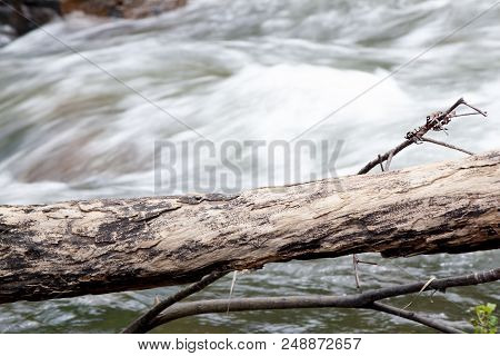 Timber On The River Of Waterfall Swiftly Moving Stream.river Of Waterfall In Forest During The Rainy