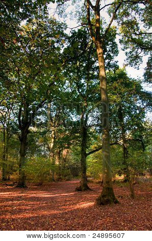 Woodland Scene In Autumn Fall.