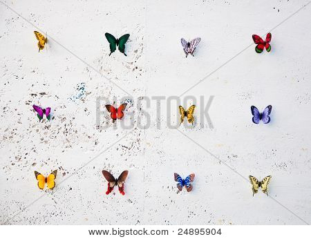 Rows Of Butterflies