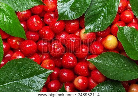 Pink Cherries With Leaves In Drops Of Water. Top View