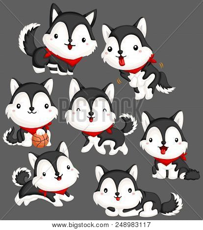 Siberian Husky Vector Set With Many Husky Pose