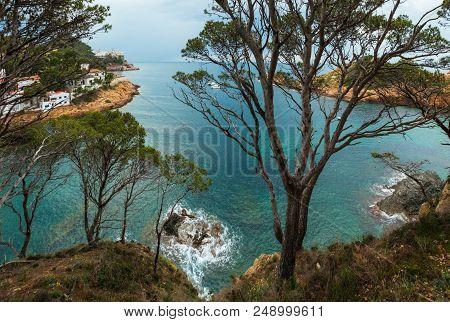 Sea Bay Summer View Through Conifer Trees. Costa Brava, Catalonia, Spain.