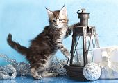 maine coon, new year poster