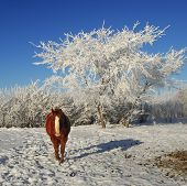 A Chestnut Horse Set against Winter Trees poster