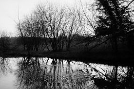 Tall, Bare Trees Reflected In Water. Traditional High Contrast Black And White With Simulated Red Fi