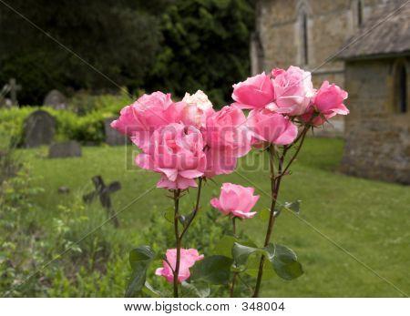 Graveyard Roses