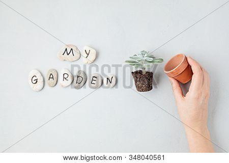 Home Gardening Concept. Flat Lay With The Text My Garden On Stones And Woman Hand Holding Flower Pot