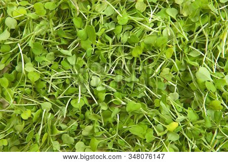 Background Of Arugula Or Rocket, An Edible Annual Plant In The Family Brassicaceae Used As A Leaf Ve