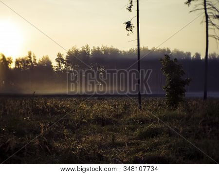 Morning Mist Coming Out Of The Woods Into The Field, Russia
