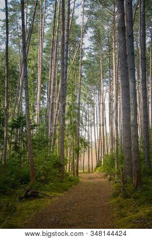 North Pine Sunny Forest With Path, Russia Natural Travel Outdoors Background