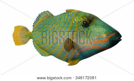 3D Rendering Orange Lined Triggerfish On White
