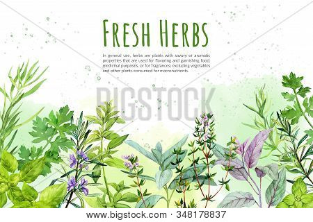 Watercolkor Bg With Culinary Herbs And Plants
