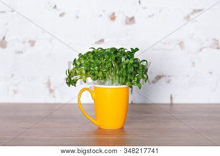 Fresh Leaves Of A Coffee Plant In Yellow Cup. Sprouted Coffee Sprouts, Fresh Natural Green Leaves, P