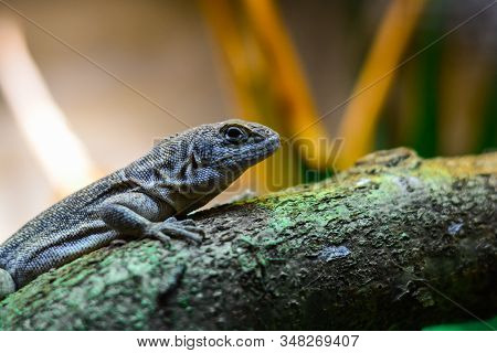 Picture Of Lizard Climbing Tree Trunk And Looking With Clever Expression If There Is Any Danger Over