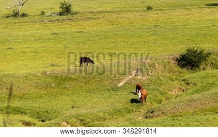 Cattle Farm For Meat Export In Brazil5
