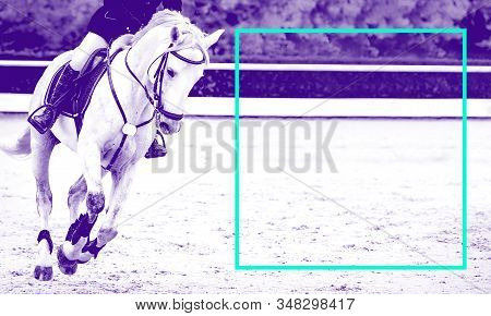 Horse And Rider, Black And White Banner Or Header, Billboard, Duo Tone, Red. Beautiful White Horse P