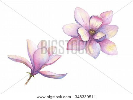 Watercolor Beautiful Magnolia Flowers Set Isolated On White Background. Watercolour Hand Drawn Sprin
