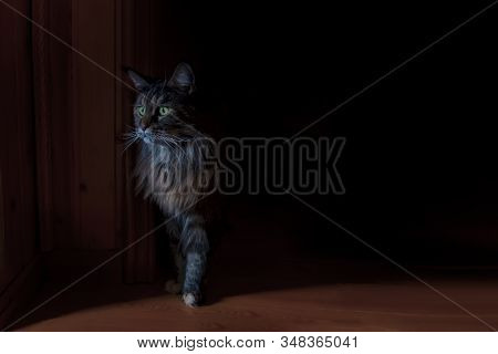 Cat Maine Coon Out Of The Gloom, Catlike Silhouette With Green Eyes