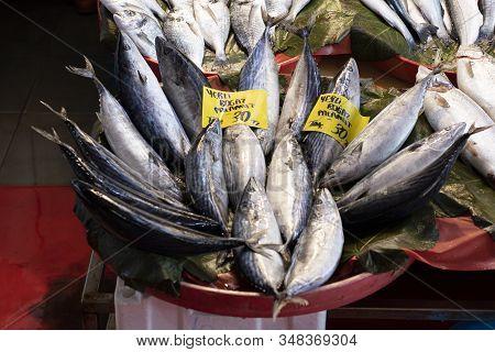 Fresh Bonito Fishes At Fish Market Counter.