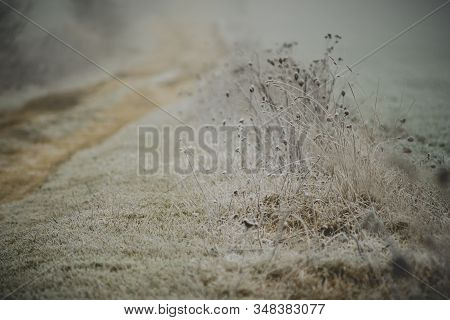 Weeds And Herbs Covered In Hoar Frost In A Foggy Day