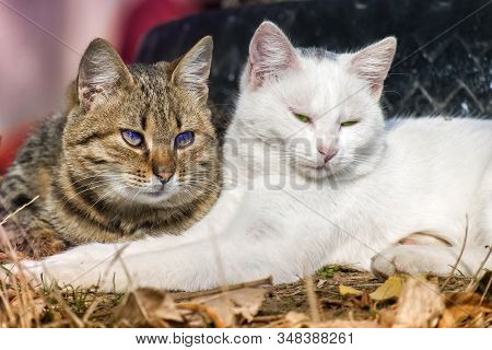 Cute Cats. White Tomcat And Striped Cat Huddled Together Lie On The Ground