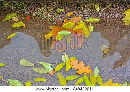 Autumn Puddle After Rain With Colorful Autumn Leaves In Reflection Water In Autumn Colors In The Fal