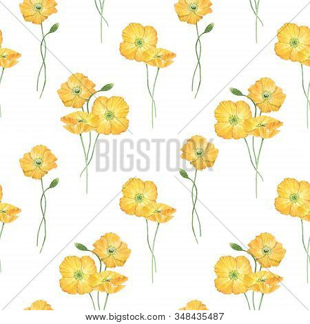 Beautiful Floral Summer Seamless Pattern With Watercolor Hand Drawn Yellow Poppy Wild Flowers. Stock