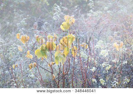 Rimy Autumnal Leaves