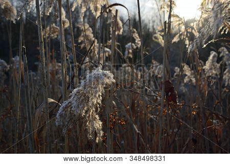 Frozen Grass Near Ervenice Village In Czech Landscape In Winter On 21Th January 2020