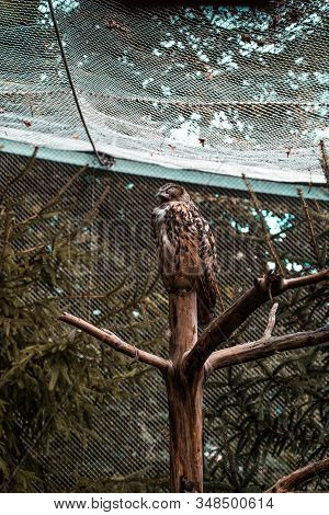 Sleeping Owl In The Zoo Of Innsbruck