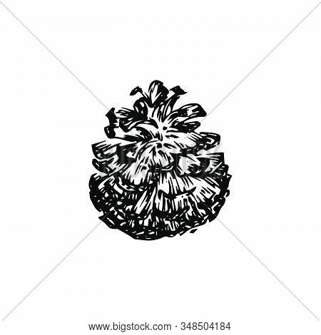 Hand Drawn Pinecone Vector Illustration. Linocut Pine Or Fir Cone Decorative Graphic Image. Stylized