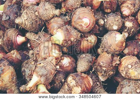Group Of Fresh Taro Vegetable Pile Called Colocasia Esculenta In Scientific Name, Stcking Raw Taro I