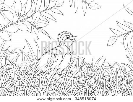 Small Quail With Camouflaged Plumage Walking In Thick Grass Of A Forest Glade On A Warm Summer Day,