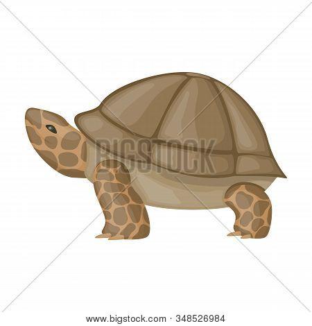 Sea Turtle Vector Icon.cartoon Vector Icon Isolated On White Background Sea Turtle.